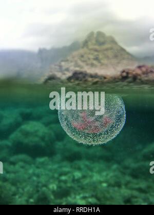 Nahaufnahme der transparente Quallen in Blasen unter der Oberfläche von klarem Wasser in die wilde Natur fließende