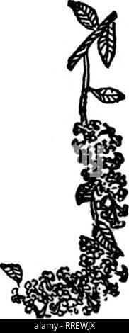 . Floristen Review [microform]. Blumenzucht. . Bitte beachten Sie, dass diese Bilder sind von der gescannten Seite Bilder, die digital für die Lesbarkeit verbessert haben mögen - Färbung und Aussehen dieser Abbildungen können nicht perfekt dem Original ähneln. extrahiert. Chicago: Floristen Pub. Co - Stockfoto