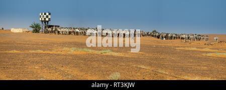 Sahara, Sudan, 6. Februar 2019: Große Herde Kamele an einem Wasserloch in der Wüste - Stockfoto