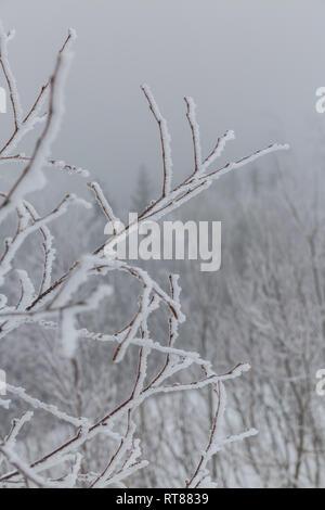 Winterbäume im Nebel - Stockfoto
