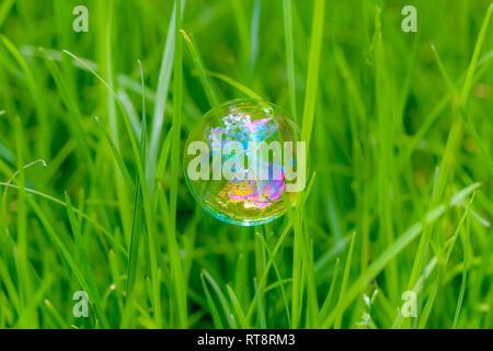 Bunte Seifenblase fliegen über Gras Hintergrund Hintergrund Partei - Stockfoto