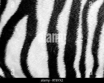 Zebrafell Muster Kunstleder fabric - Stockfoto