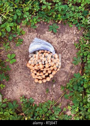 Tulasi Holz Rosenkranz liegen auf einem Felsen im Hintergrund in das grüne Gras. Japa Mala. Mantra. 108 Perlen.