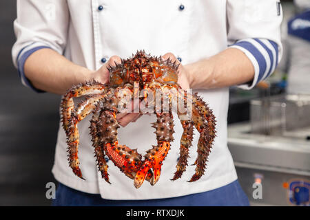 Chef der Premium Michelin Restaurant in weiße Uniform hält frischen Big Kamtschatka Krabbe. Konzept nützliche Meeresfrüchte im Menü der Elite 5-Sterne Hotel - Stockfoto