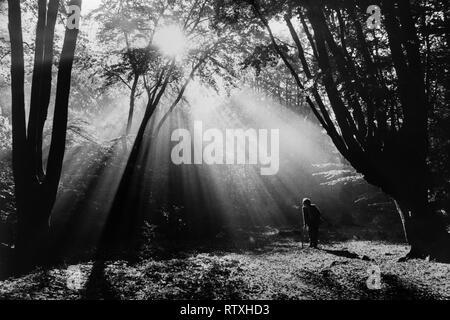 Epping Forest Essex England UK. 1979 Mann Spaziergänge durch frühen Morgen Nebel im Wald in der Nähe von Espping Loughton Essex England - Stockfoto