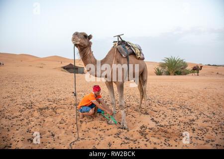 Menschen neigen zu einem Kamel in der Wüste von Merzouga, Marokko Sahara - Stockfoto