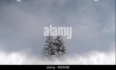 2 Schnee Pinien in einem bewölkten, Misty, alpine Landschaft sitzen. Die Bäume befinden sich in einer perfekten kalten Winter Szene. Stockfoto