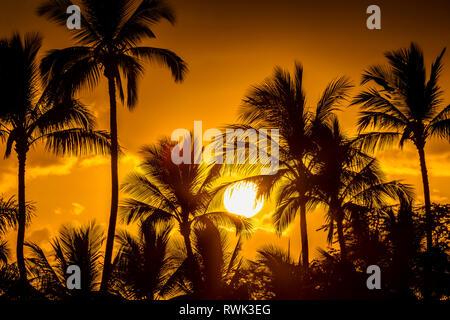 Die Sonne durch Silhouette Palmen, Wailea, Maui, Hawaii, Vereinigte Staaten von Amerika - Stockfoto