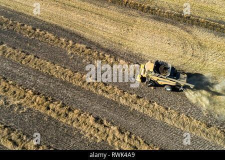 Luftaufnahme eines Mähdreschers mit Reihen von cut Raps, westlich von Beiseker, Alberta, Kanada - Stockfoto