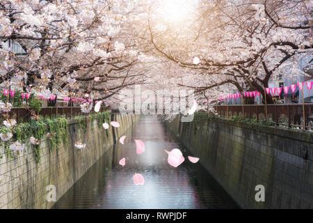 Kirschblüte ausgekleidet Meguro Canal in Tokio, Japan. Frühling im April in Tokio, Japan. - Stockfoto