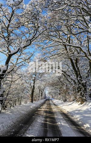 Verschneite Bäume überragt die Hauptstraße zwischen Stonyburn und Fauldhouse, West Lothian. - Stockfoto