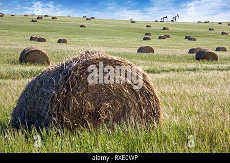 Heuballen im Feld mit Ölpumpe Buchsen im Hintergrund, Alberta, Kanada - Stockfoto