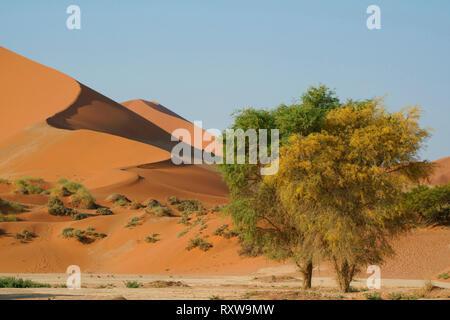"""Sossusvlei ist ein Salz und clay Pan von prächtigen roten Dünen, von Ablagerungen von der Tsauchab Fluss gebildet, bevor die Strömung von Dünen umgeben blockiert wurde. Ossusvlei bedeutet das Wort ''Dead-Sumpf"""" und obwohl der Name ursprünglich auf der Pan bezeichnet, bedeutet es jetzt das große Gebiet der riesigen roten Dünen, Sossusvlei Nationalpark umfassen. Western Namibia, in der Nähe von Sesriem, Afrika."""