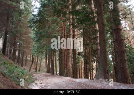 Steiler weg. weg von hohen Pinien umgeben auf dem Gehsteig. Natur wächst Geometrische im Wald - Stockfoto
