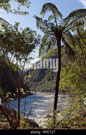 Mokihinui Fluss gesehen von der South Bank durch Native Bush, Neuseeland.