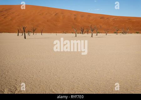 Nahaufnahme der Muster der Wind sand in toten Baum Wald Wüste in Form der Linie vor einem hohen roten Sanddünen - Stockfoto