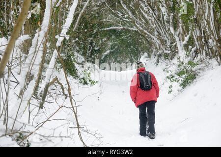 Frau in einem roten Mantel Wandern auf Schnee Wald Anschluss abgedeckt, Wiltshire, UK, Februar. Model Released. - Stockfoto