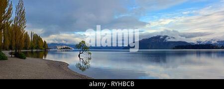 Lake Wanaka & Baum Moody am frühen Morgen Panorama mit Gebäude Norwest Wind, Neuseeland
