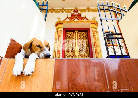 Einen niedlichen Hund schläft vor der schönen Wat That Luang Tai Tempel in der Mitte der Stadt von Vientiane, Laos. - Stockfoto