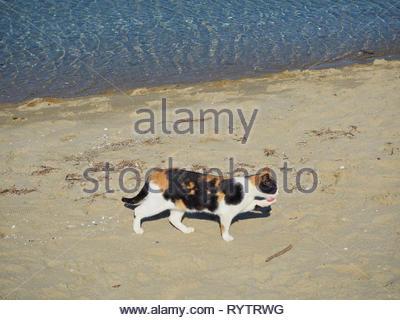 Streunende Katze lecken ihre verletzten Bein vorne links - Stockfoto