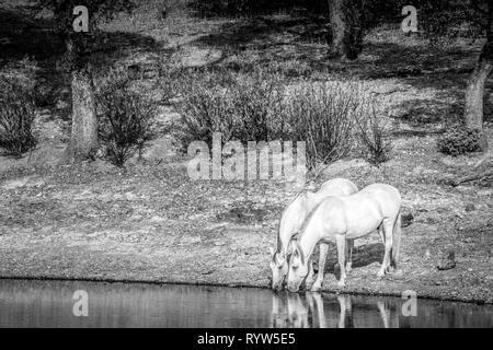 Pferde entfernt an einem See im Bereich - Stockfoto