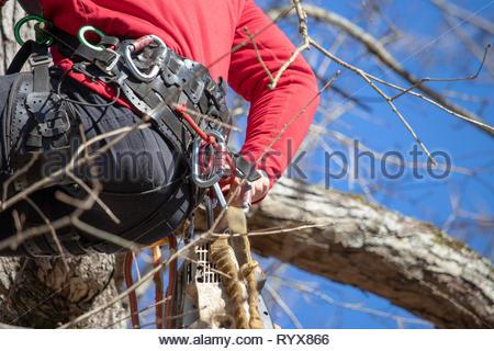 Baum Kletter Gurt : Baum chirurgen ausrüstung klettern klettergurt seil kettensäge