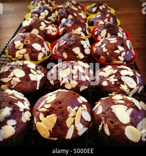 Schokoladen-muffins - Stockfoto