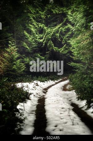 Verschneiten Pfad in den Wald
