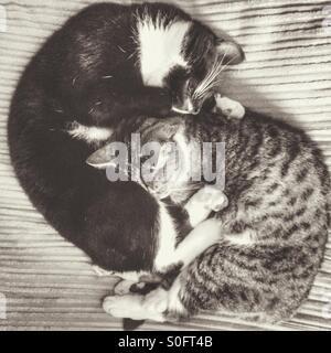 Katzen-Yin und yang - Stockfoto