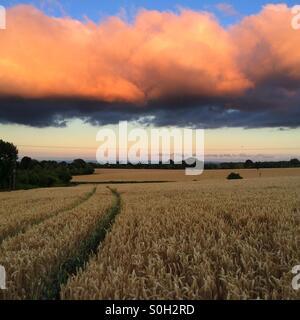 Vorbeiziehende Wolken über einem Weizenfeld bei Sonnenuntergang - Stockfoto
