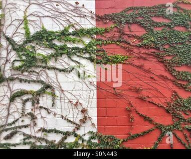 Reben auf Wand Stockfoto