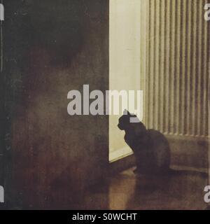 Einsame schwarze katze warten an einer t r fenster stockfoto bild 310345334 alamy - Schwarze fenster ...