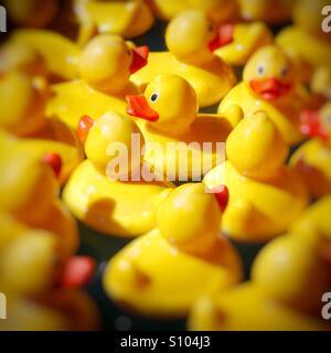 Helles Gelb Kautschuk Enten schwimmend in Haken eine Ente Spiel - Stockfoto