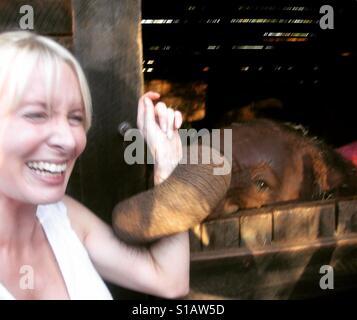 Elefanten greifen Frau Arm mit Stamm - Stockfoto
