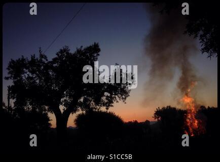 Tagesanbruch Lagerfeuer zwischen den Olivenbäumen, Katalonien, Spanien.