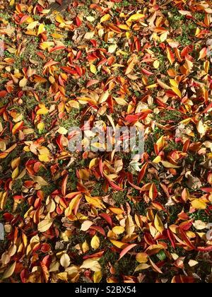 Herbst Blätter auf dem Boden zeigen, rote, gelbe, orange und grüne Gras. Stockfoto