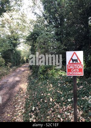 Vorsicht Katzen Kreuzung humorvoll Zeichen auf einem Feldweg - Herbst/Herbst am Nachmittag. Schild rechts in Bild - Stockfoto