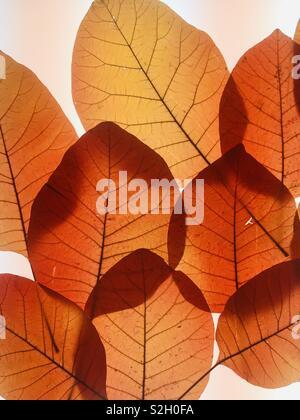 Orange leaf Silhouette - Stockfoto