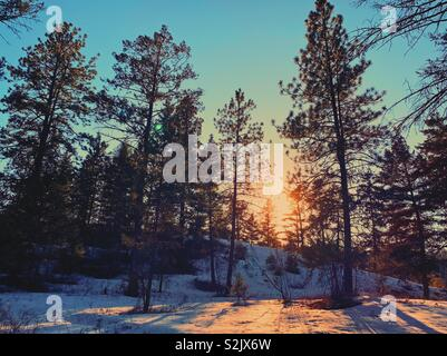 Winter Sonnenuntergang durch immergrünen Wald. - Stockfoto