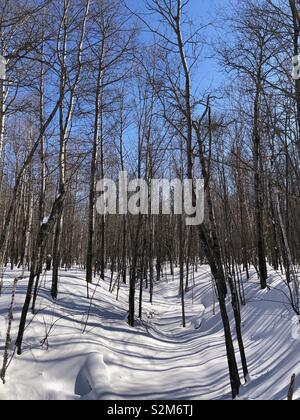 Baum Schatten auf dem Schnee - Stockfoto