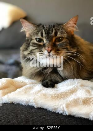 Lazy Sunday's - Stockfoto