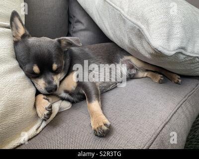 Welpen schlafen auf Garten Stuhl - Stockfoto