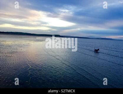 Hund am Strand in Donegal Irland bei Sonnenuntergang - Stockfoto