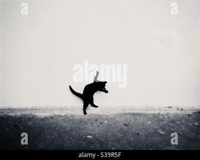 Monochrome Ansicht einer jungen schwarzen Katze, die vor einer weißen Wand spielt.