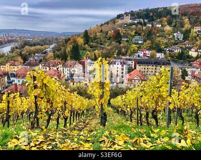 Herbstansicht der Stadt im Würzburger Stadtteil Zellerau mit Käppele-Kirche im Hintergrund und Weingütern im Vordergrund, Deutschland.