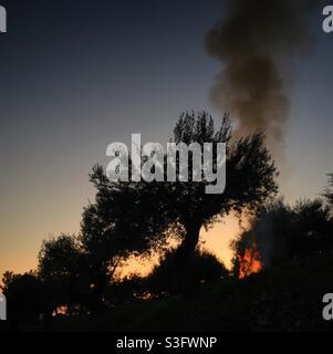 Tagesanbruch Lagerfeuer in einem Olivenhain, Katalonien, Spanien.