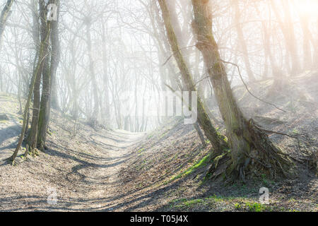 Pfad in den geheimnisvollen foggy Forest Hills. Straße durch alte krumme Bäume im dichten Nebel unheimlichen Wald. - Stockfoto