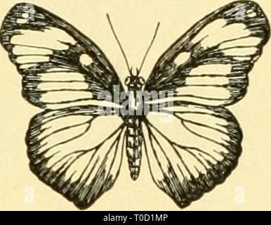 Elementare Biologie; eine Einführung in die elementare Biologie; eine Einführung in die Wissenschaft des Lebens elementarybiolog 00 grue Jahr: 1924