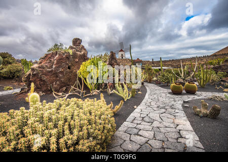 Kakteen in der Kaktus Garten, Lanzarote, Kanarische Inseln, Spanien - Stockfoto