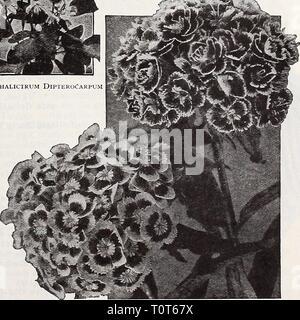 Dreer ist Herbst Katalog 1932 (1932) Dreer ist Herbst Katalog 1932 dreersautumncata 1932 henr Thalictrum Dipterocarpum Jahr: 1932 10 10 10 10 10 15 10 Doppel- und Einzelzimmer Sweet William Rock Garden und alpine Pflanzen (Henry Correvonj. $ 6,00 pro Kopie, Postpaid